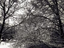 Snow on tree branches Stock Photography