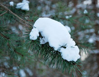 Snow on tree branches Royalty Free Stock Images