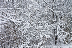 Snow on tree branches, winter pattern Stock Photos