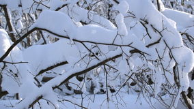 Snow on the tree branches stock video footage