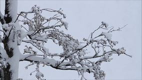 Snow on tree branches stock video footage