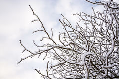 Snow on tree brunches in UK winter 3 Royalty Free Stock Photography