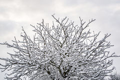 Snow on tree brunches in UK winter 1 Royalty Free Stock Image
