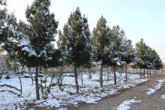 Snow on tree Royalty Free Stock Photo