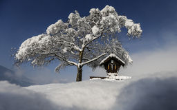 Snow on tree. A tree is covered with snow on a sunny winter day in western Austria Stock Photo
