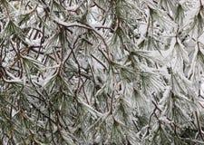 Snow on a tree stock photo