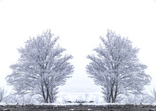 Snow tree Royalty Free Stock Images
