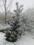 Snow on a tree making a white winter wonderland in nieuwerkerk aan den IJssel, the Netherlands.  stock images