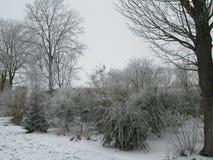 Snow on a tree making a white winter wonderland in nieuwerkerk aan den IJssel, the Netherlands.  royalty free stock photos