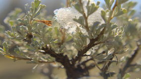 Snow tree panning. Video of snow tree panning stock video