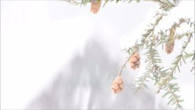 Snow, tree, pine, cones, in snow storm.  NJ New Jersey. Snowfall, heavy, in winter, with pine tree moving in the wind stock video