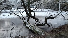 Snow_on_a_tree_in_a_river stock photos