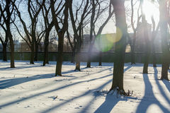 Snow and Tree Shadows Stock Images