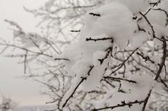 Snow on the tree/snow on the branch. Snow on the tree, snow on the branch tree Royalty Free Stock Photos