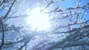 Snow tree snow falling slow motion magic winter mood stock footage