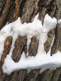 Snow on a tree trunk Stock Photos