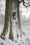Snow on a tree trunk Stock Photography