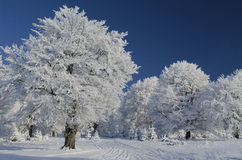 Snow tree under blue sky Stock Photo