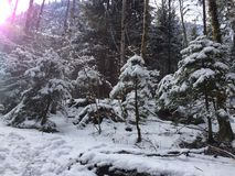 Snow tree. On the way to new swanstone stock image