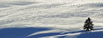 Snow Tree Winter Fence Royalty Free Stock Photos