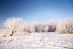 Snow on trees. At the river bank stock images