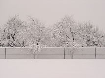 Snow trees. And fence royalty free stock images