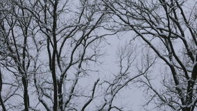 Snow on trees against a winter sky in the park. Camera tracks then holds. stock video footage
