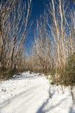 Snow Trees Stock Photos