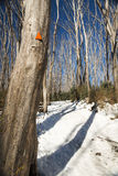 Snow Trees Stock Images