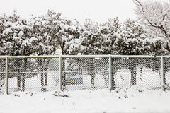 Snow trees behind the wall. Royalty Free Stock Image