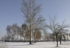 Snow among the trees, caravaggio. Winter landscape of an empty parking area with trees, after a light snowfall on plains in lombardy Stock Photography