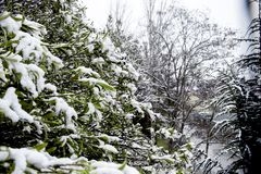 Snow trees on the city royalty free stock images