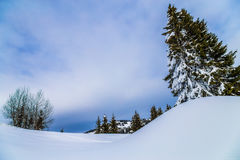 Snow and trees, with a cloudy blue sky Stock Photo