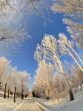 Snow trees by fisheye lens Royalty Free Stock Photo