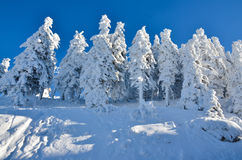 Snow on trees at high altitude on mountain, winter landscape Royalty Free Stock Image