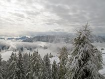 Snow trees high up the mountain. Beautiful view on the top of a mountain, with low clouds downbelow and snowy peaks at the horizon Stock Images