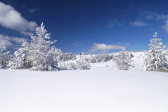 Snow trees on hill Royalty Free Stock Image