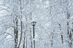 Snow Trees. Snow on trees and a lamp post landscape scene. Quiet scene with a serene feel to the image. Monotone hues Royalty Free Stock Image