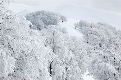 Snow trees in the mountains royalty free stock images