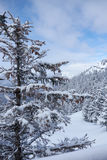 Snow trees and mountains. Winter snow trees and mountains landscape royalty free stock images