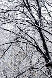 Snow on trees Royalty Free Stock Image