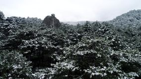 Snow on the trees. Shot. Top view on snow-covered spruce forest. Dark coniferous forests. Boreal coniferous forest