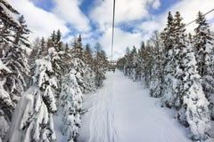 Snow on trees on ski slope, Italy stock photos