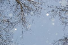 The snow and trees Royalty Free Stock Image