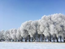 Snow Trees in Winter stock photography
