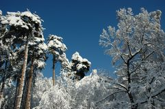 Snow trees on sunshine stock photography