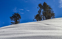 Snow and Trees. A view of fresh snow and trees with beautiful sky in background at nag tibba, uttarakhand Stock Photo