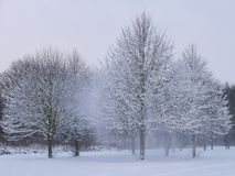 Snow trees wind Royalty Free Stock Image