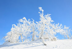 Snow and trees Royalty Free Stock Photo