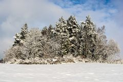 Snow trees Royalty Free Stock Photography